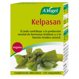 algas kelp vogel